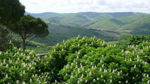 Villa Le Barone - Environnement